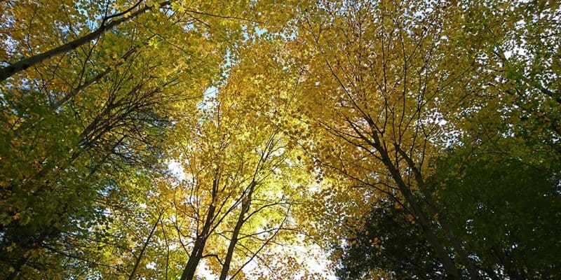 Hamilton Hiking Trails
