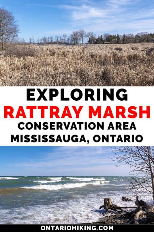 Rattray Marsh Conservation Area in Mississauga is an amazing walking trail in Mississauga, Ontario. There are expansive boardwalks across beautiful natural spaces and wetlands. Here's your guide to exploring Rattray Marsh on Lake Ontario. #Mississauga #Ontario #Canada #Hiking #Walking
