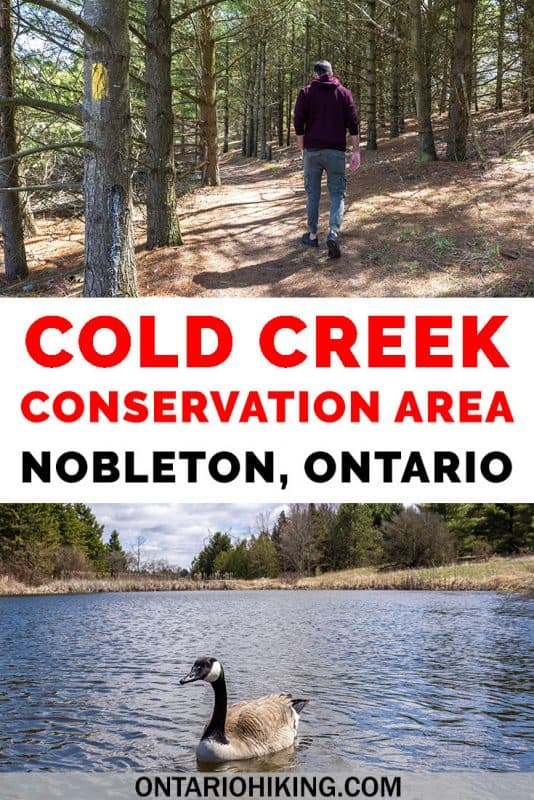 Cold Creek Conservation Area is a protected natural space in York Region (Greater Toronto Area). There's a variety of beautiful scenery and wildlife viewing opportunities all in one trail: pine forests, wetlands, bogs and swamps. It's the perfect day trip from Toronto! #Hiking #Ontario #Canada #Trails #ConservationArea