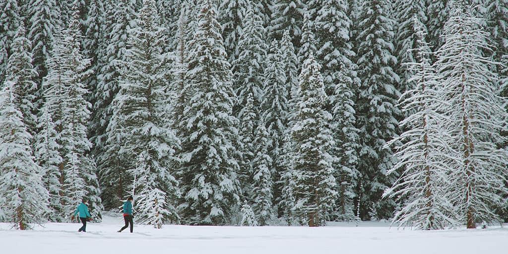 Snowshoeing in Toronto