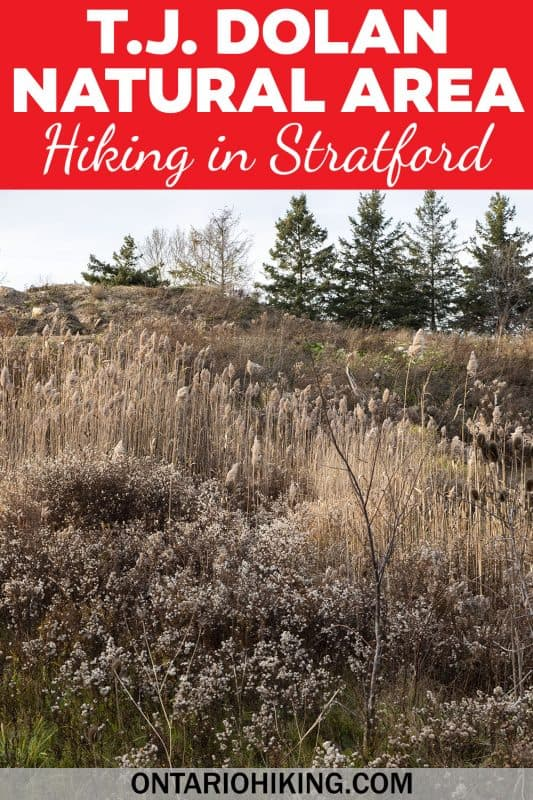 T.J. Dolan Natural Area is a wonderful place to go hiking in Stratford, Ontario. You can walk right along the river on these quiet, picturesque trails.