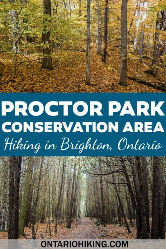The ultimate hiking guide to Proctor Park Conservation Area in Brighton, Ontario. These beautiful trails in the Bay of Quinte region in southeastern Ontario are a hidden gem! Let me show you how to explore these amazing trails.