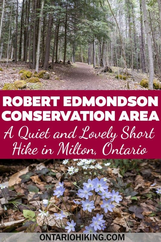Robert Edmondson Conservation Area is a little known park in Milton, Ontario. It's free to visit and there's a lovely forest trail and lake.