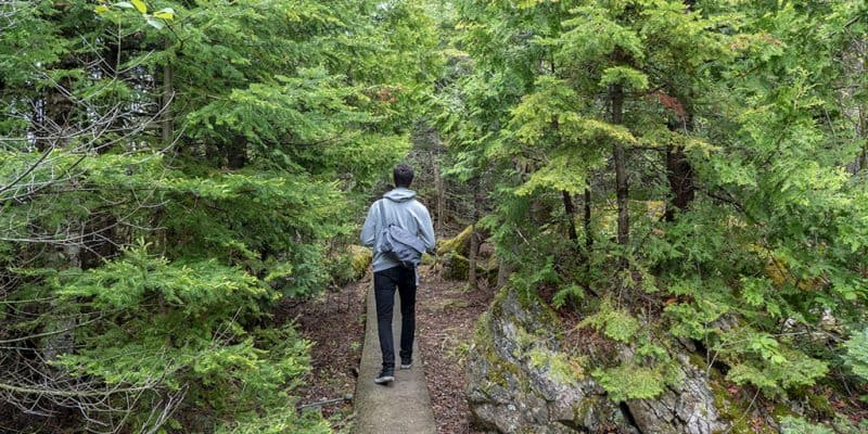 How to Avoid Ticks While Hiking