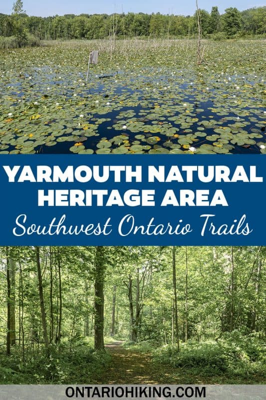 Yarmouth Natural Heritage Area is a wonderful place to go hiking and explore nature in Elgin County, Ontario. It's located near the village of Sparta in Southwest Ontario. See beautiful wetlands and Carolinian forest.
